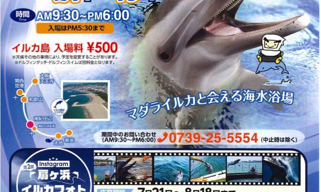 イルカと泳げる海へ行こう!