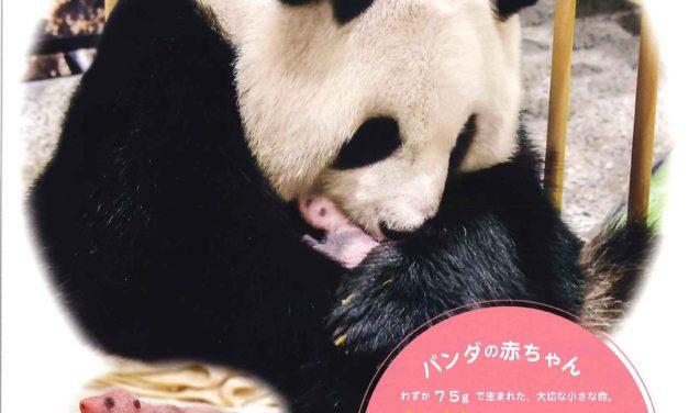 ジャイアントパンダの赤ちゃん 名前募集!!
